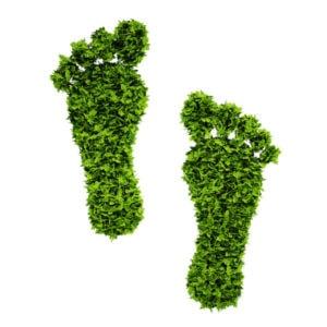Ökologischer Fußabdruck - Nachhaltige Imkerei