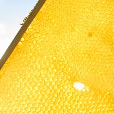 Gold leuchtende Honigwabe im Gegenlicht