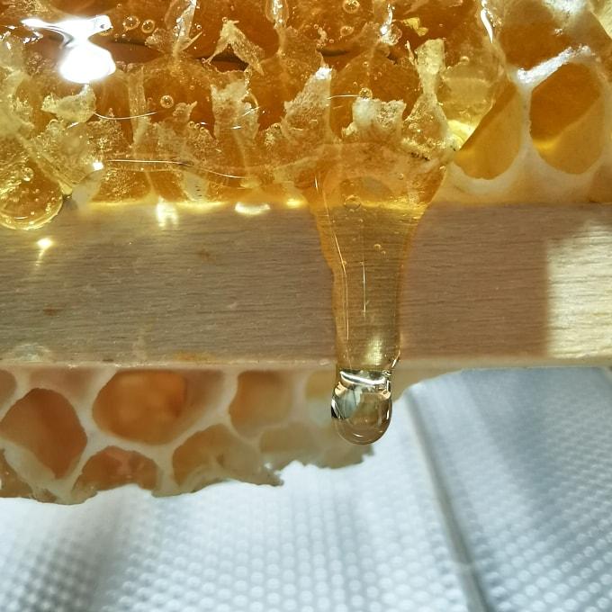 Frischer unbehandelter Honig bei der aktuellen Honigernte