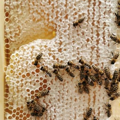 Echter Honig vom Imker mit einer Wabe mit ansitzenden Bienen - die Arbeit vom Imker ist transparent
